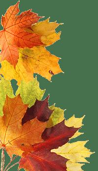feuilles-automne-header3